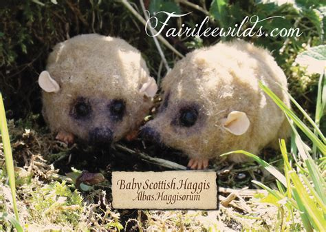 FROM THE HEART WITH GINI RIFKIN: HAGGIS: EAT IT OR PET IT?